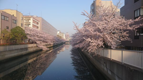 やがて、松尾芭蕉の居宅があったらしい海辺橋もこの有様…