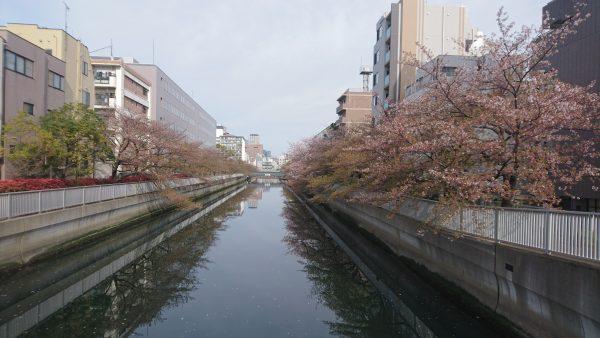 4月14日 早く葉がでると良いな… 夏の装いを待ちます