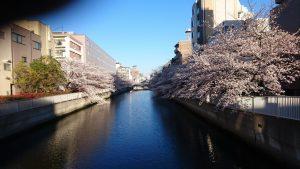 4月3日丁度満開のころでした