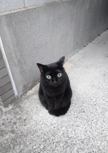 恐ろしく可愛い猫が近所に居りました…
