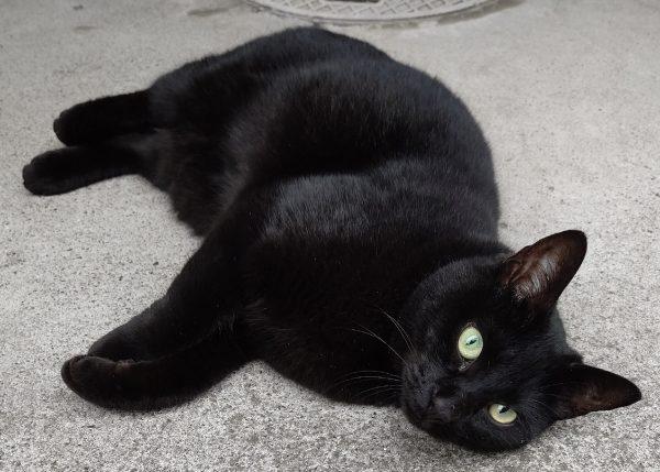 近所の猫、元気でした