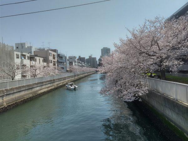 裏の仙台堀川から会社方面を臨む
